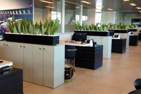 Стоит ли использовать цветы в офисе