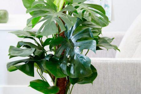 Какие растения выбрать в офис
